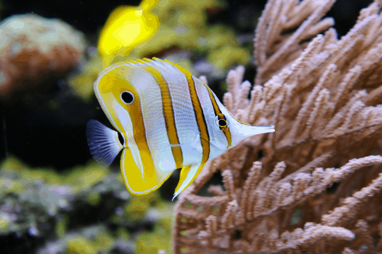 Best Aquarium Wavemakers for Enthusiasts to Hunt for