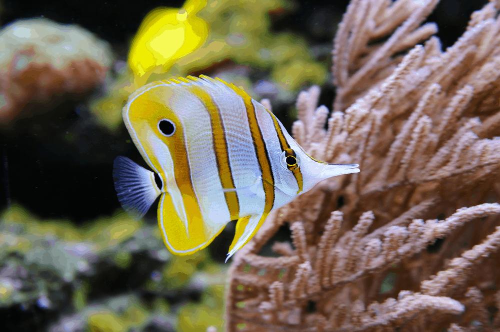 best aquarium wavemakers
