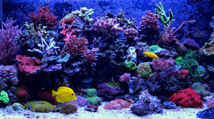 How To Raise Alkalinity In Reef Tank