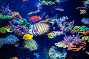 How to lower phosphate in a reef tank