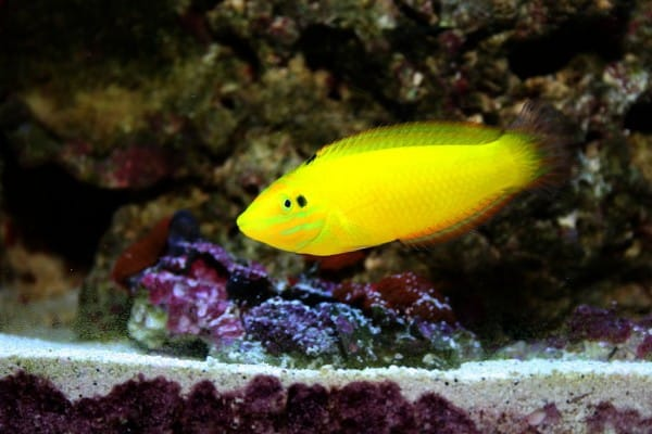 How To Treat Ich In A Reef Tank: 6 Effective Ways