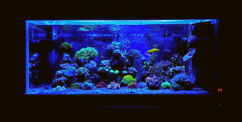 how much LED light for reef tank