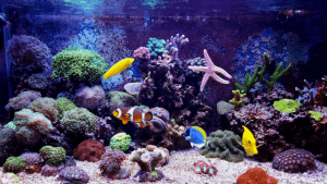 how to get rid of algae in a reef tank