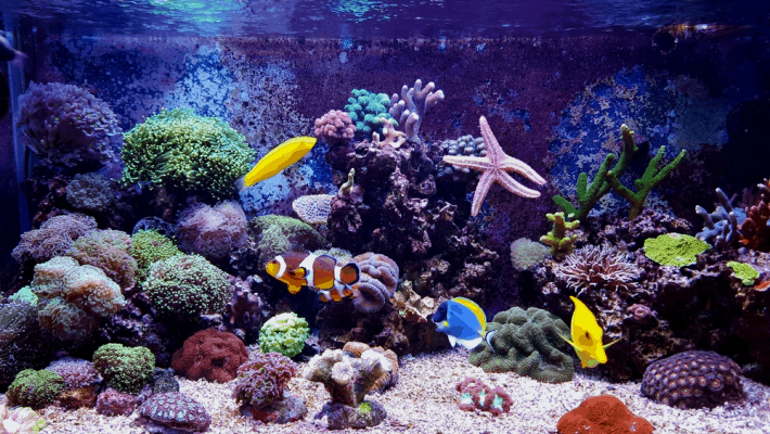 How To Get Rid Of Algae In A Reef Tank: Complete Algae Removal Guide