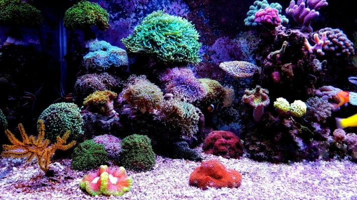 Best Nano Reef Tanks to Hunt for in 2021 and Beyond!