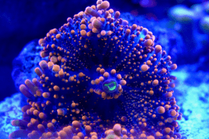 How To Raise Magnesium in Reef Tank