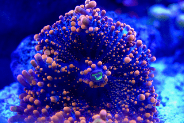 How To Raise Magnesium In Reef Tank Safely