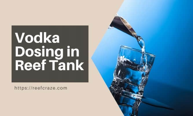 What Is Vodka Dosing In A Reef Tank