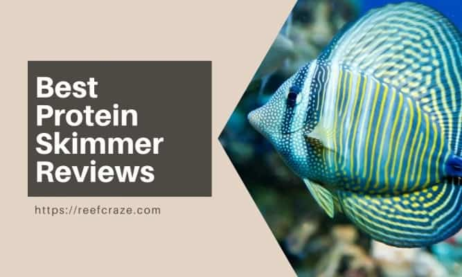 Best Protein Skimmer Reviews Compiled for Aquarium Lovers