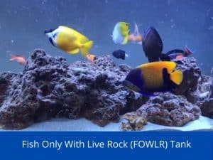 Fish Only With Live Rock (FOWLR) Tank