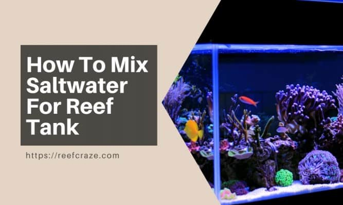 How To Mix Saltwater For Reef Tank?