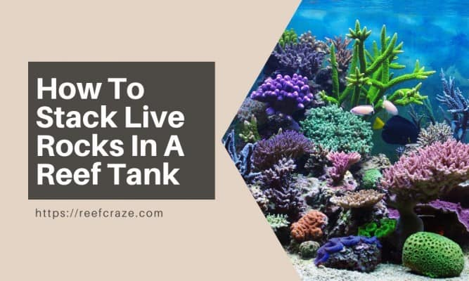 How To Stack Live Rocks In A Reef Tank