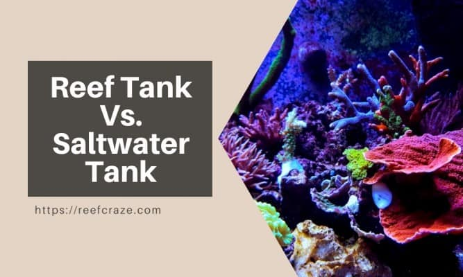 What Is The Difference Between A Reef Tank And A Saltwater Tank?