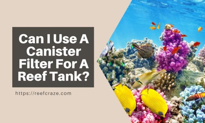 Can I Use A Canister Filter For A Reef Tank?