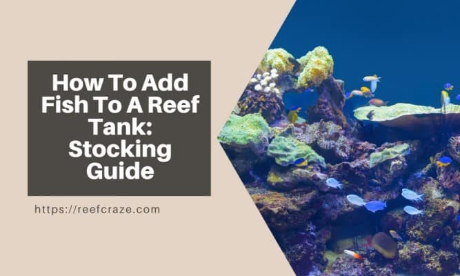 When To Add Fish To A New Reef Tank: stocking saltwater aquarium