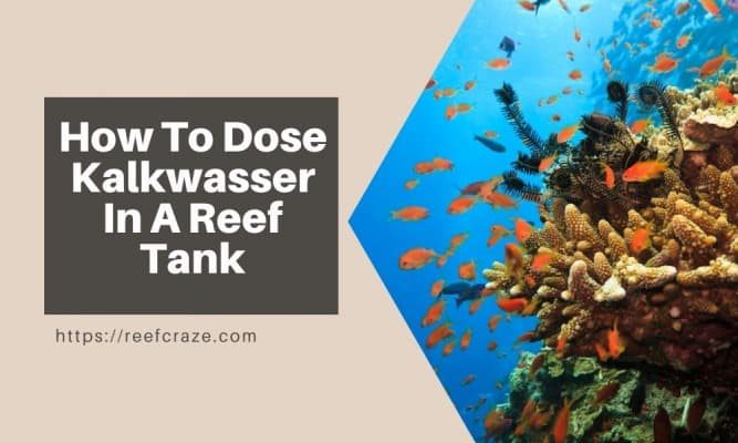 How To Dose Kalkwasser In A Reef Tank?