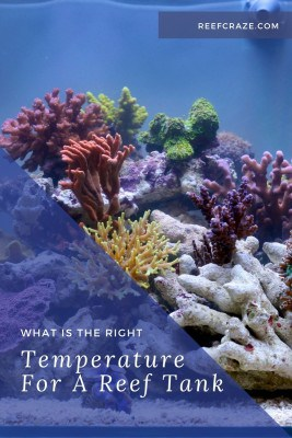 What Is The Right Temperature For A Reef Tank