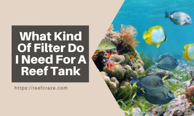 What Kind Of Filter Do I Need For A Reef Tank