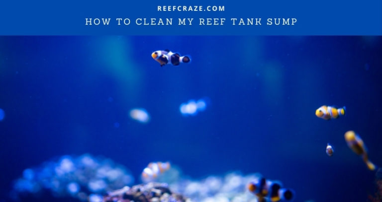 How To Clean My Reef Tank Sump?