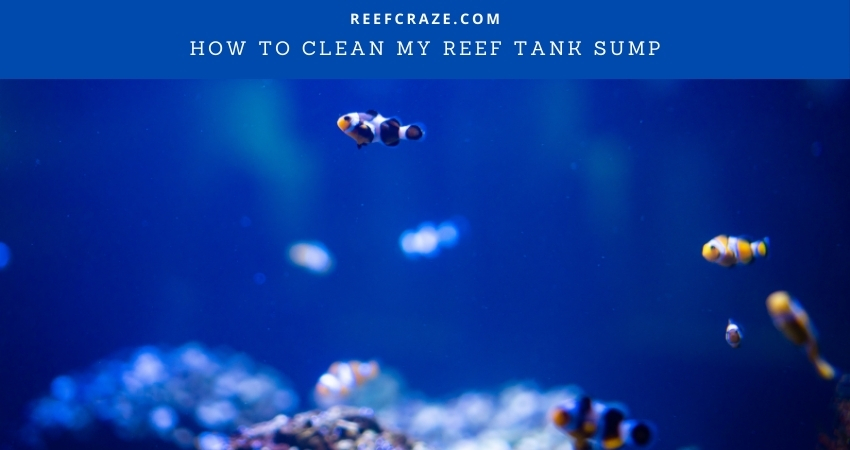 How To Clean My Reef Tank Sump